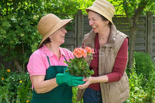 Two happy senior ladies gardening together Stock photo © belahoche