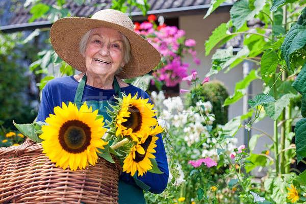 Gelukkig oude vrouw vers zonnebloemen senior vrouw Stockfoto © belahoche