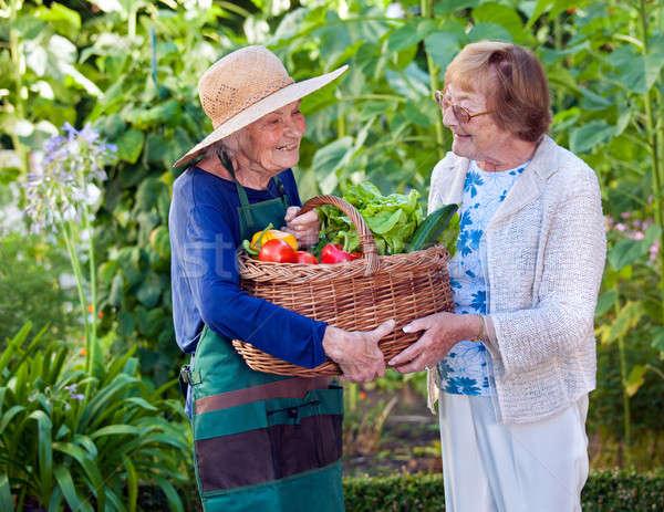 Senior Women Holding a Basket of Fresh Vegetables Stock photo © belahoche