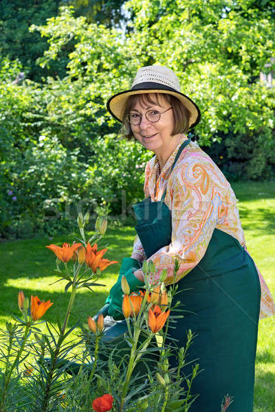Smiling friendly lady watering plants in a garden Stock photo © belahoche