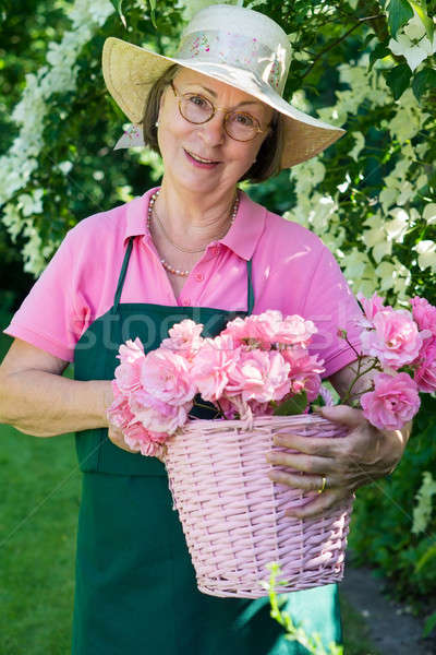 Single gardener with rose cuttings in basket.  Stock photo © belahoche