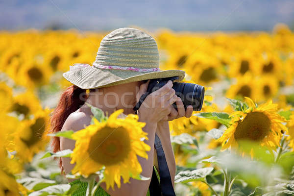 Young woman taking photos of sunflowers. Stock photo © belahoche