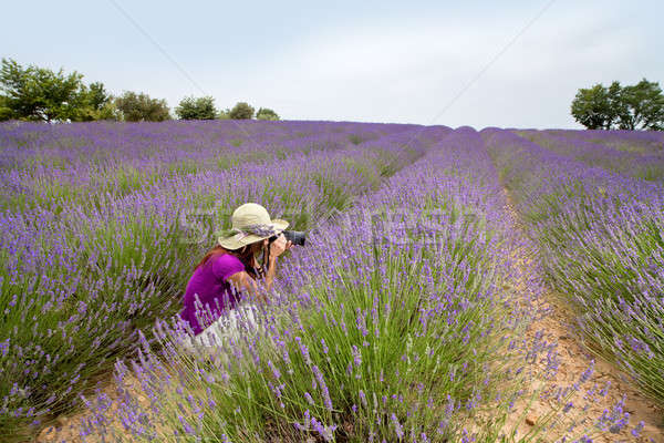 Female sitting in lavender field taking photos in Provence, Fran Stock photo © belahoche
