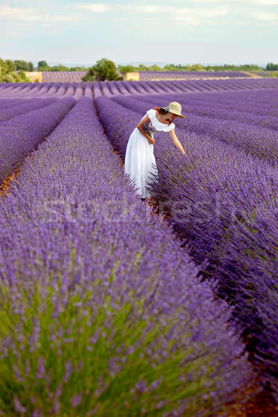 Beautiful young lady picking some lavender in lavender field. Pr Stock photo © belahoche