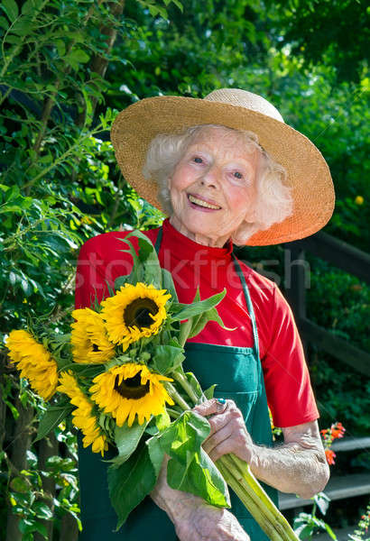 Happy senior lady picking flowers in her garden. Stock photo © belahoche