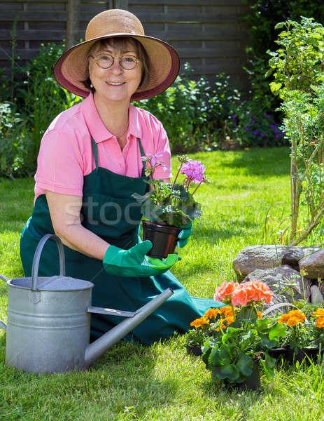 Active senior women working in her garden Stock photo © belahoche