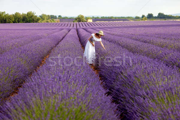 Beautiful woman picks lavender in field of violet lavender, Prov Stock photo © belahoche