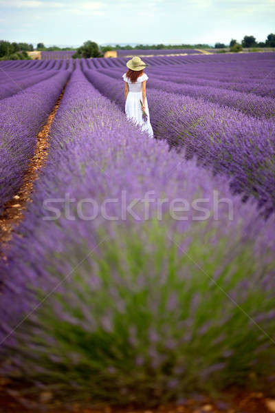 Beautiful girl in white dress walking in lavender field, Provenc Stock photo © belahoche