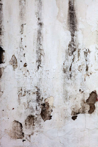 White old wall Stock photo © belahoche