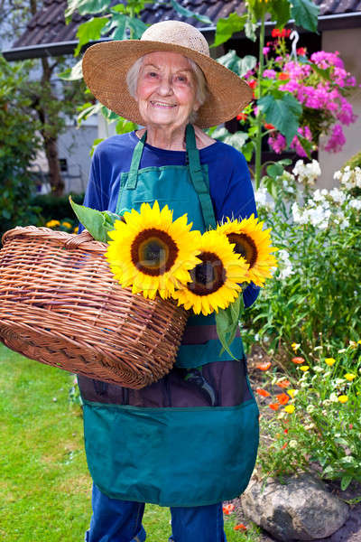 Stock photo: Happy Old Woman with Basket Harvesting Sunflowers