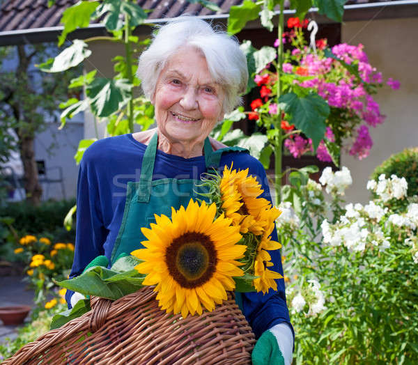 Elderly Woman Carrying Basket with Sunflowers Stock photo © belahoche