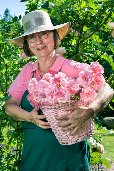 Female gardener with basket of rose cuttings. Stock photo © belahoche