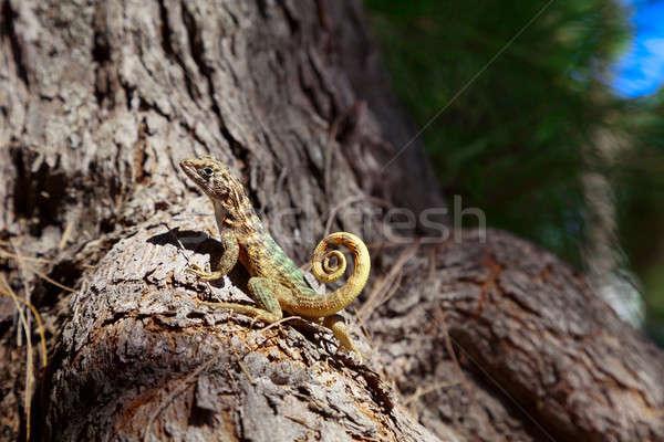 Jaszczurka mały drzewo lasu kolor zwierząt Zdjęcia stock © Belyaevskiy