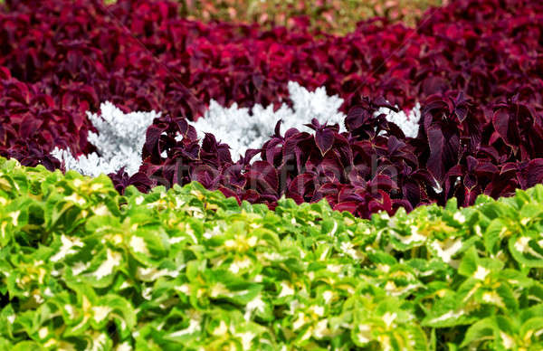 Lit de fleurs été ville parc Photo stock © Belyaevskiy