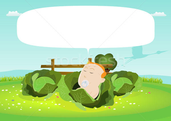 It's A Boy ! Newborn Baby In A Cabbage Stock photo © benchart