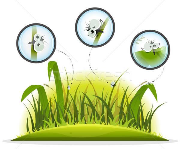 смешные насекомое характер внутри весны трава Сток-фото © benchart