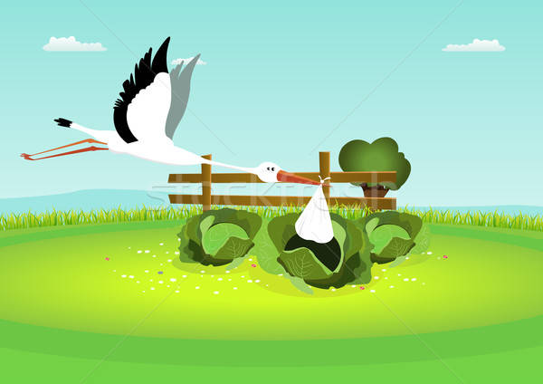 Stork Delivering Baby In Cabbage Stock photo © benchart