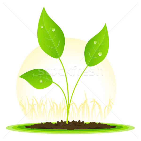 Plant Seed Growth Stock photo © benchart