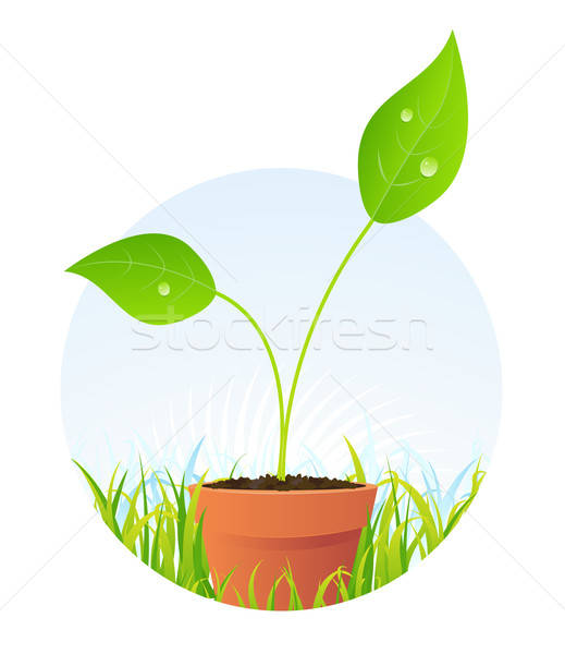 Spring Plant Seed In Pot Stock photo © benchart