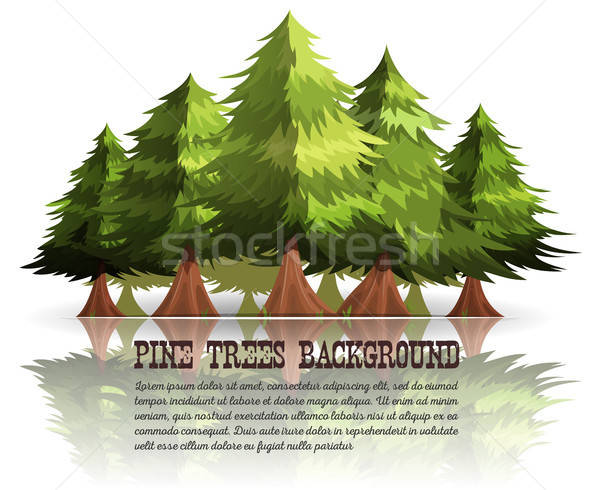 Pine Trees And Firs Background Stock photo © benchart