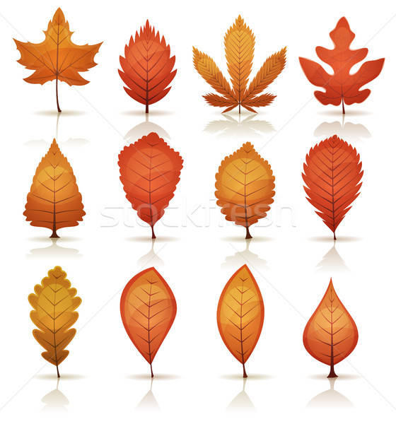 Autumn Leaves Set Stock photo © benchart