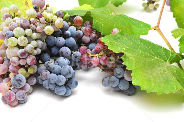 Wild Grape And Leaves Stock photo © bendicks