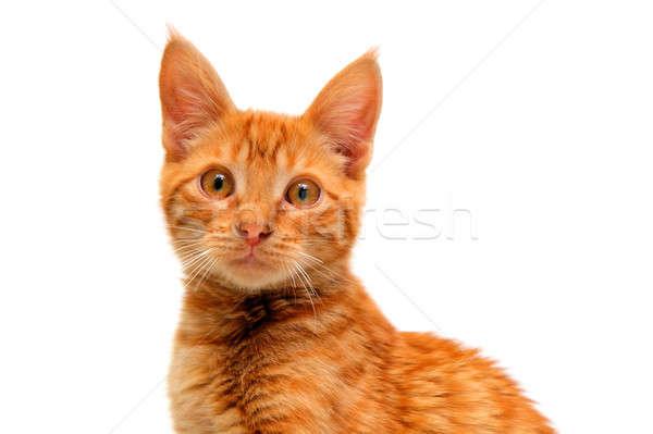 Isolado laranja gato gatinho grande olhos Foto stock © bendicks