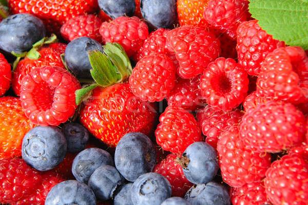 Berry Closeup Stock photo © bendicks