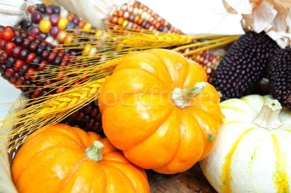 Abóboras indiano milho decorativo laranja branco Foto stock © bendicks