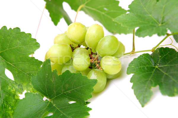 Green Grapes Stock photo © bendicks