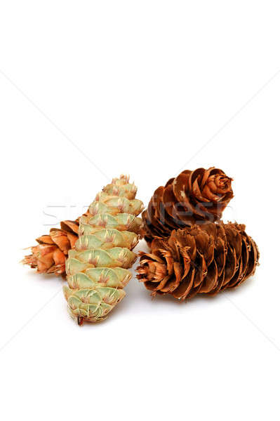 Pine Cones Stock photo © bendicks