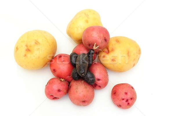 Nuevos patatas tres diferente colores rojo Foto stock © bendicks