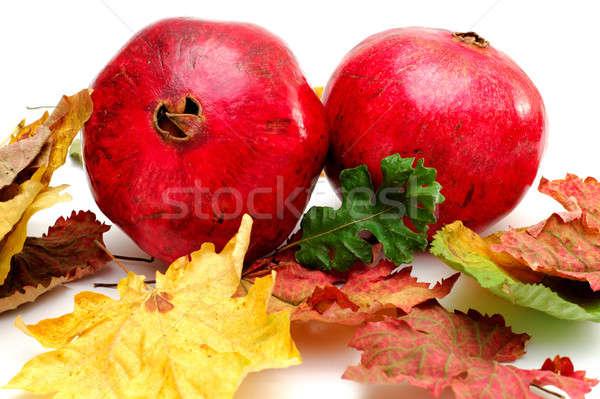 Outono brilhante vermelho colorido cair folhas Foto stock © bendicks