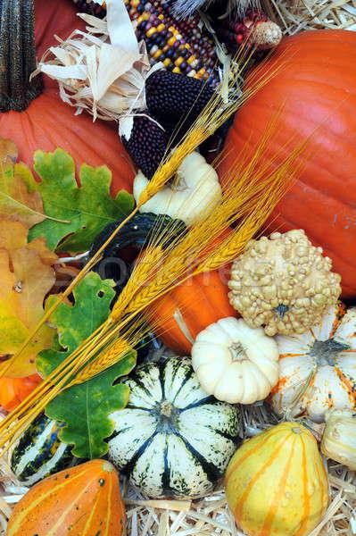 Otono cosecha calabazas calabacín alimentos trigo Foto stock © bendicks
