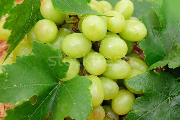 Green Grape Closeup Stock photo © bendicks
