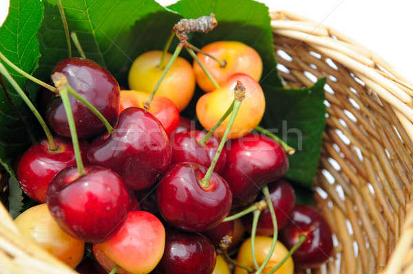 Ripe Cherry Stock photo © bendicks