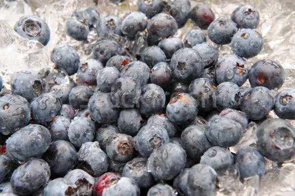 Blueberries Chilling On Ice Stock photo © bendicks
