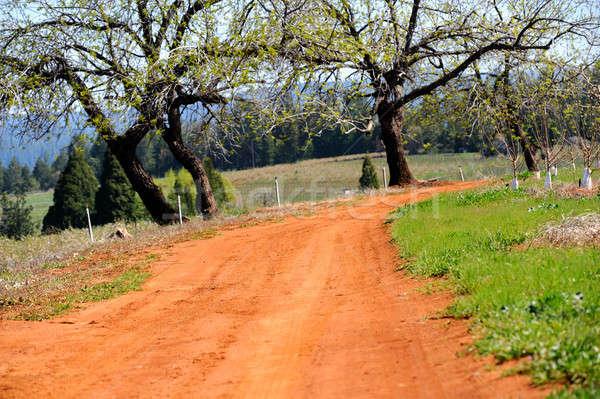 País estrada de terra corrida vermelho solo carvalho Foto stock © bendicks
