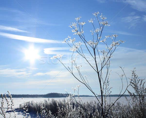 Hiver paysage ciel bleu soleil ciel arbre Photo stock © bendzhik