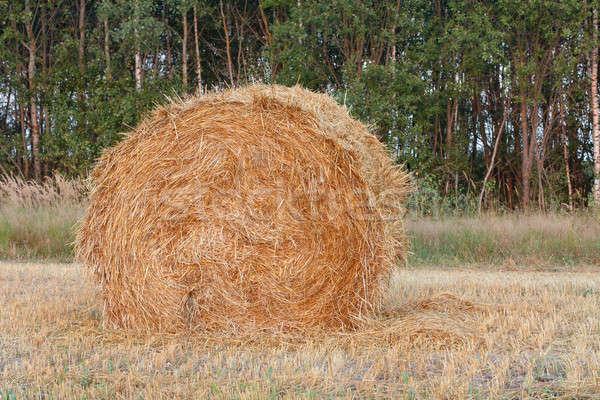 haystacks Stock photo © bendzhik