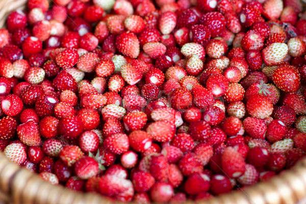 Fraîches fraise fraises faible panier Photo stock © bendzhik