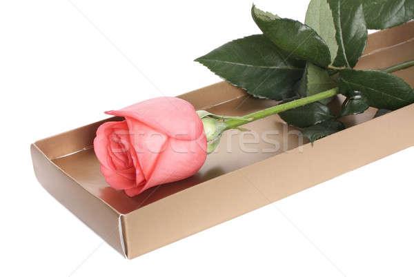 закрывается розовый роз окна белый любви Сток-фото © bendzhik