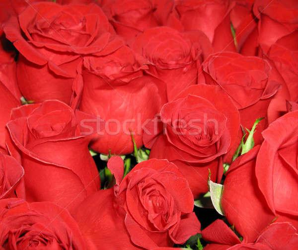 цветы букет ярко красные розы тесные цветок Сток-фото © bendzhik
