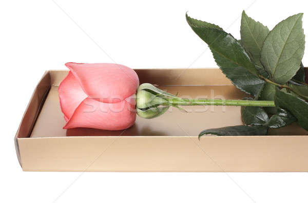 Rose rose roses boîte blanche amour Photo stock © bendzhik
