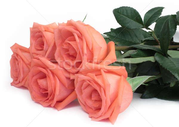 Roses bouquet rose fleurs amour feuille Photo stock © bendzhik