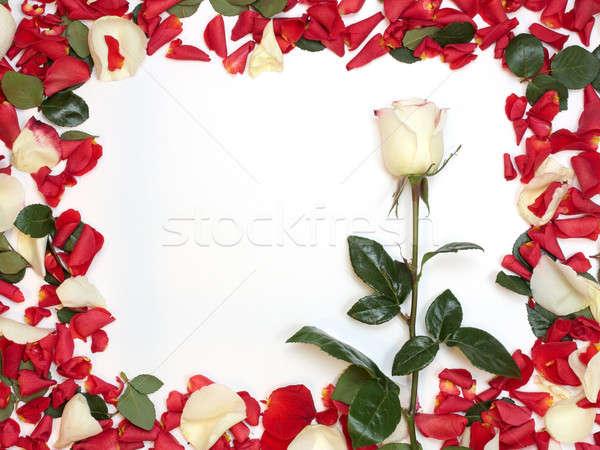 Stockfoto: Frame · bloemblaadjes · boeket · Rood · witte