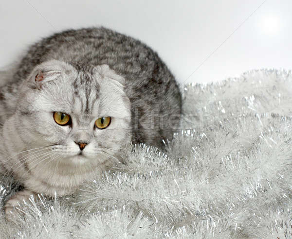 Cat with tinsel Stock photo © bendzhik