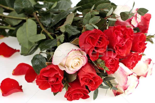 Rosas rojas ramo blanco flor amor hoja Foto stock © bendzhik