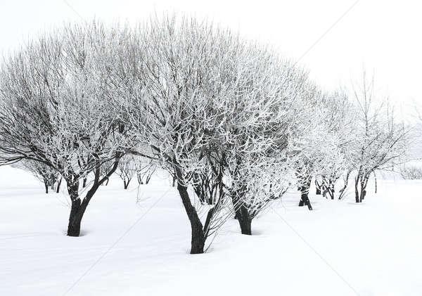 Ağaçlar orman kapalı don güneş doğa Stok fotoğraf © bendzhik