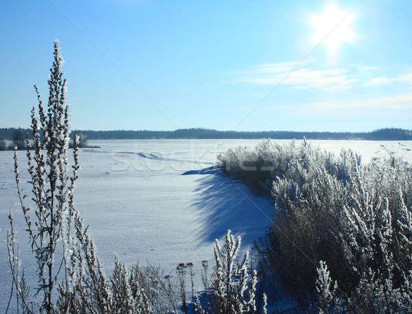 зима пейзаж Blue Sky солнце небе дерево Сток-фото © bendzhik